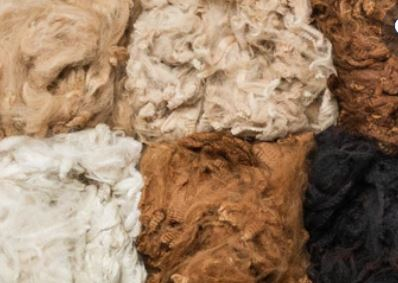 Natural colored fibers